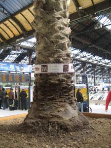 SNCF - les pots de plantes ne sont pas des cendriers